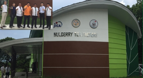 Mulberry Tea factory of PSAU